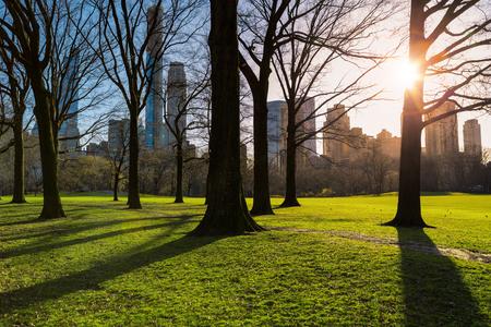 Central Park at sunny evening. New York outdoors Zdjęcie Seryjne