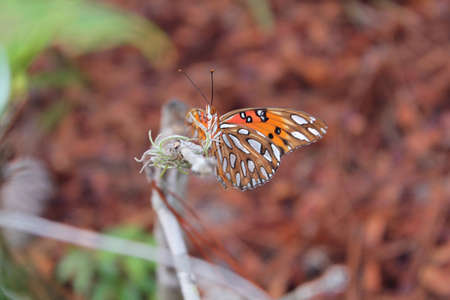 nibbling: orange butterfly nibbling on bush brown background