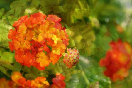 zachte bloemen mix tropische achtergrond