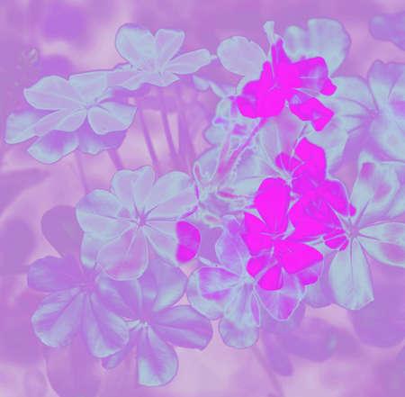 hues: digital painting in hues of blue and purple phlox