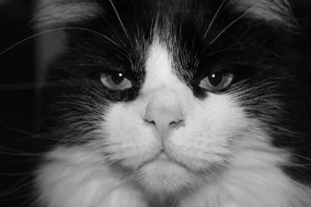 cat face close-up in black and white photo
