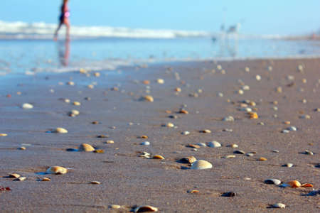 shells on beach waves and walkers in background photo