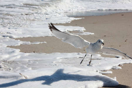shadow: seagull taking off over wave foam on beach