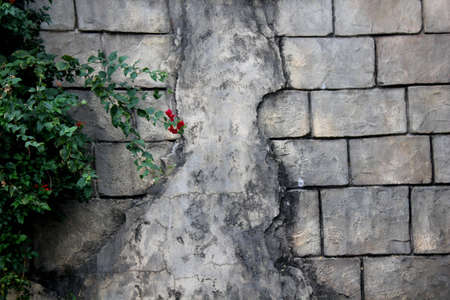 textured plastered block wall with single flower on plant