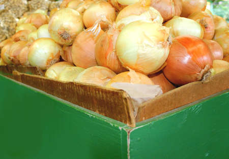 just arrived: onions just arrived at country store Stock Photo