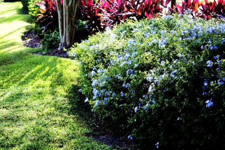 beautifully landscaped shrubs Banco de Imagens