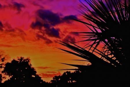 Florida sunset palm silhoutte