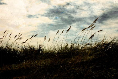 tall grasses on beach dunes as sun sets background
