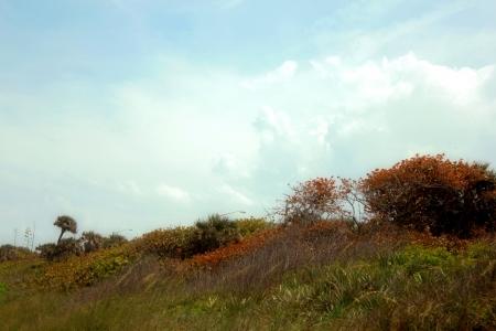 beach dunes in Summer Banco de Imagens