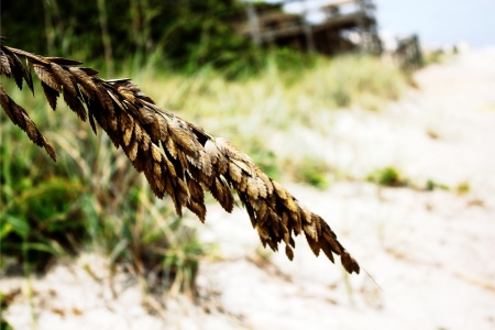 dried leaves on branch at beach