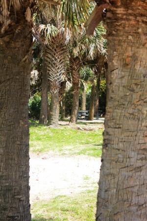 beach park between palms
