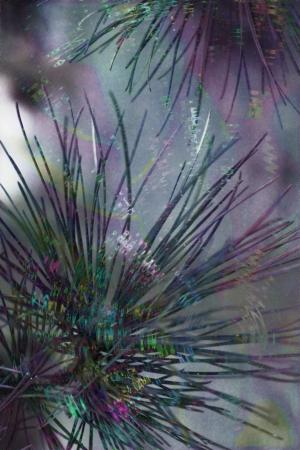 pine lights and hues Banco de Imagens