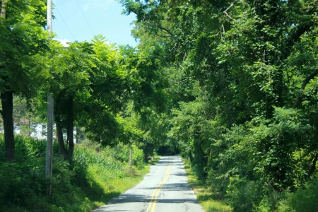 country road in the summer time