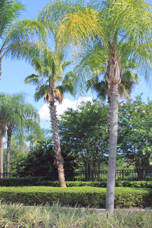 palm trees and tropical landscaping