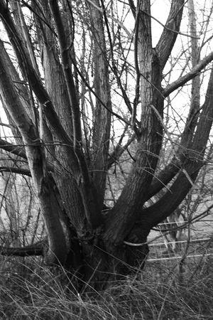 campagne: arbre