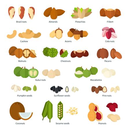 Colección de diferentes frutos secos ilustración plana. concepto de nutrición saludable. Montones de frutos secos diferentes, nueces, castañas de cajú y otros aislados sobre fondo blanco