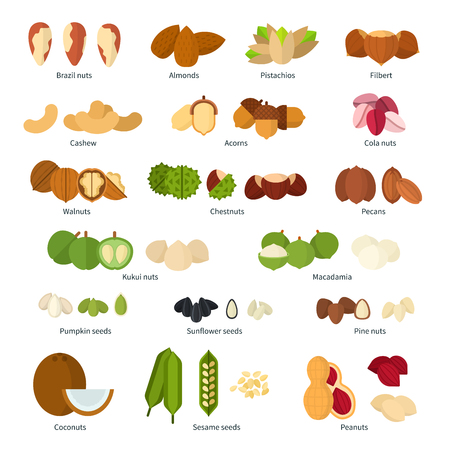 Collection of different nuts flat illustration. Healthy nutrition concept. Heaps of different nuts, walnuts, cashews and others isolated on white background