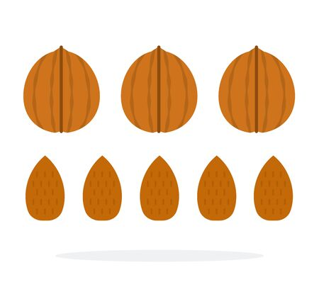 Walnuts and almonds in a shell and in a row vector flat material design isolated on white