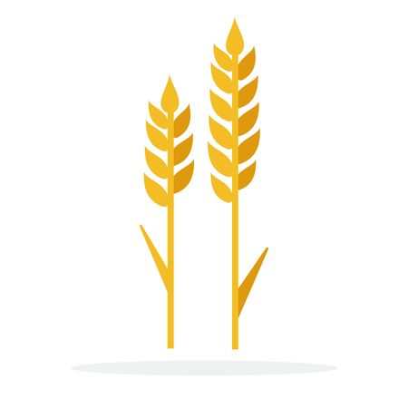 Ears of wheat vector flat isolated