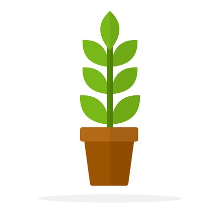 Home plant with leaves and a stem in a pot flat isolated