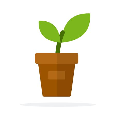 A young plant in a pot vector flat isolated