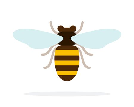 Bee front view vector flat material design isolated on white