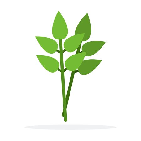 Branch of Bay leaf vector flat material design isolated on white Иллюстрация