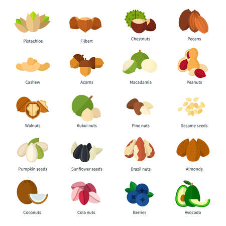Set of Nuts icons flat vector illustration