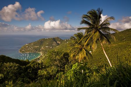Palm trees and harbour viewed from heights of tropical island Stock Photo - 2705449