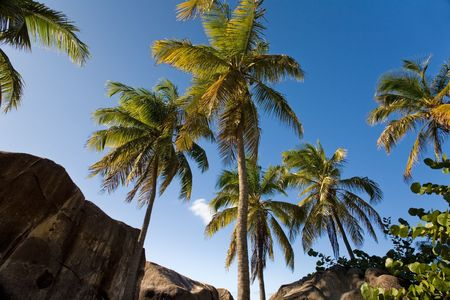 Palm trees on tropical island Stock Photo