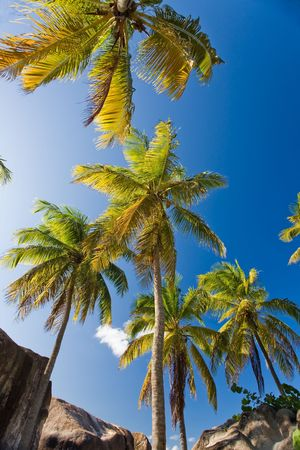 indies: Palm trees on tropical island Stock Photo