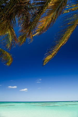 Palm tree branches swaying above turquoise waters on tropical island photo