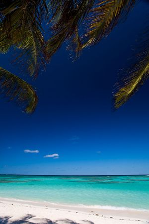 Palm tree branches swaying above turquoise waters on tropical island