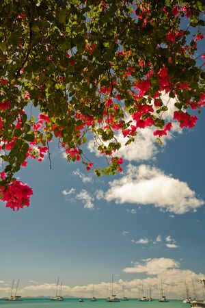 indies: Colorful tree at harbour near turquoise waters of tropical island