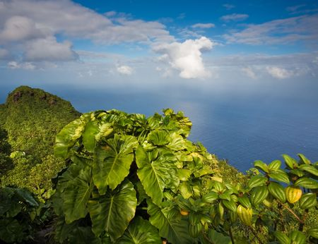 remoteness: Rainforest at summit of Mount Scenery in the Caribbean Stock Photo
