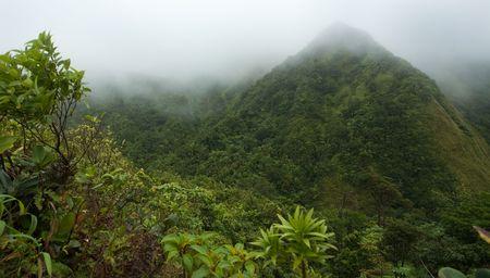 Misty rugged rainforest on lush tropical island