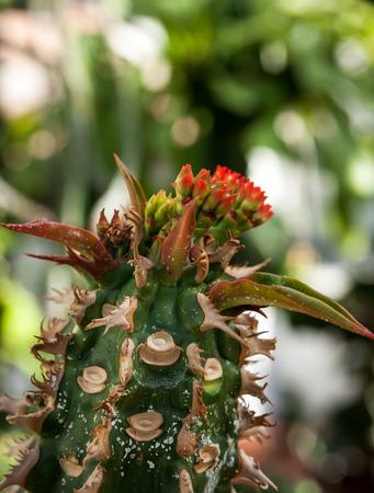 thorny: Thorny cactus