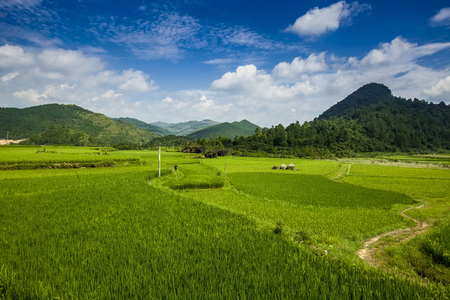 pastoral: Green pastoral scenery