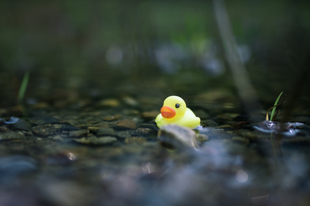 Close up view of a toy duck in the water