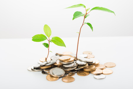 Growing wealth concept with a plant and golden coins Stock Photo