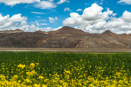 non: plateau with rape flowers scenery Stock Photo