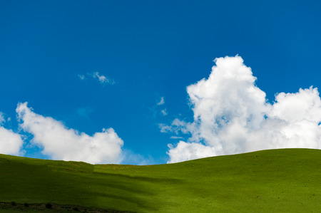 Blue sky green grass nature scenery landscape view