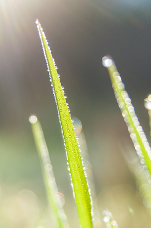 Close up view of grasses with dew drop