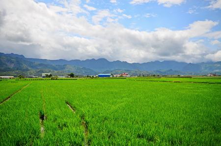 Landscape scenery view of Flower field Stock Photo