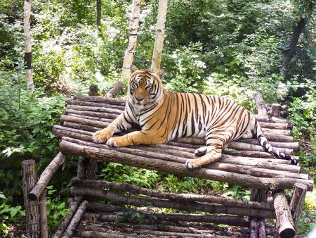 tiger close up view Stock Photo
