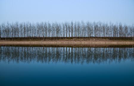 germinación: Árboles y reflexión