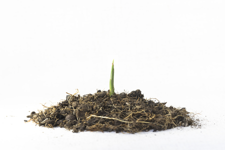 A seedling breaking from the ground Stock Photo