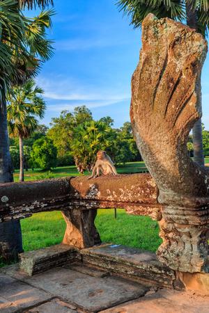 The monkeys in Angkor Wat