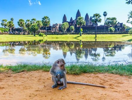Naughty monkey at angkor wat