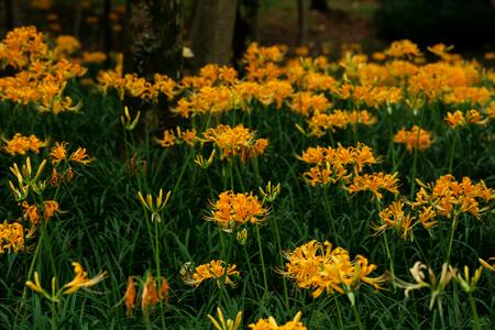 Equinox flower Stock Photo